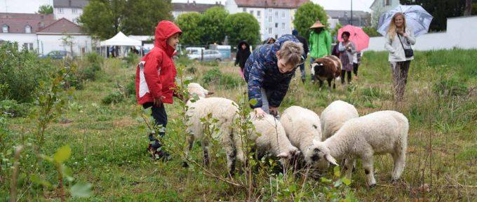 Jardins Neppert: même les moutons s'en mêlent!