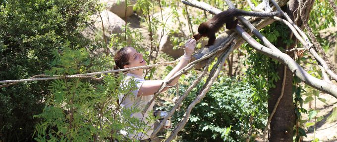Un nouvel écrin de verdure pour les titis et ouistitis au zoo