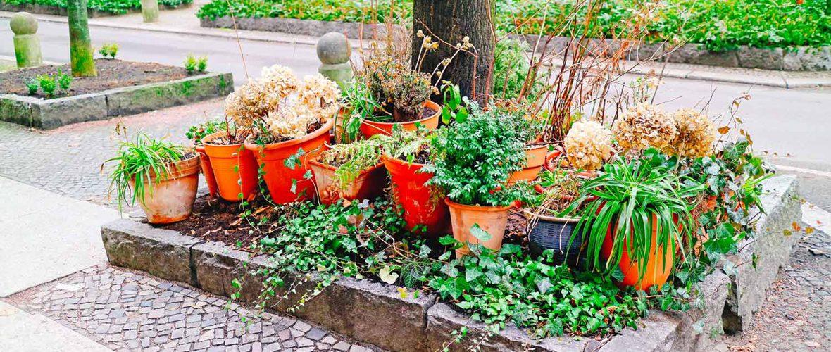 Mulhousiens, demandez votre permis de végétaliser et fleurissez votre rue | M+ Mulhouse