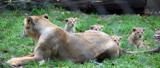 Zoo de Mulhouse : une 150e saison tournée vers l'avenir