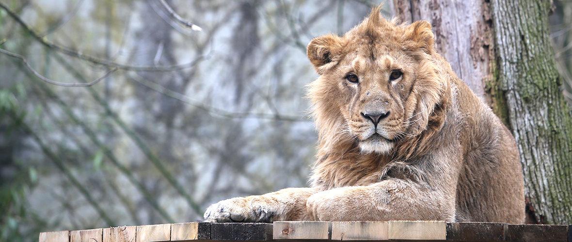 De nouveaux arrivants au zoo de Mulhouse | M+ Mulhouse