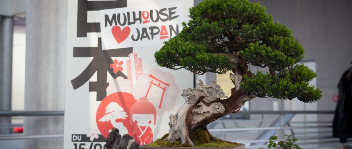 Le Japon, invité d'honneur à Mulhouse | M+ Mulhouse
