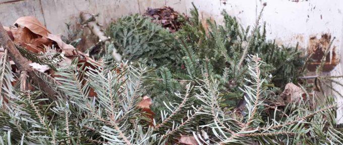 Des enclos à sapins pour lutter contre les dépôts « sauvages »