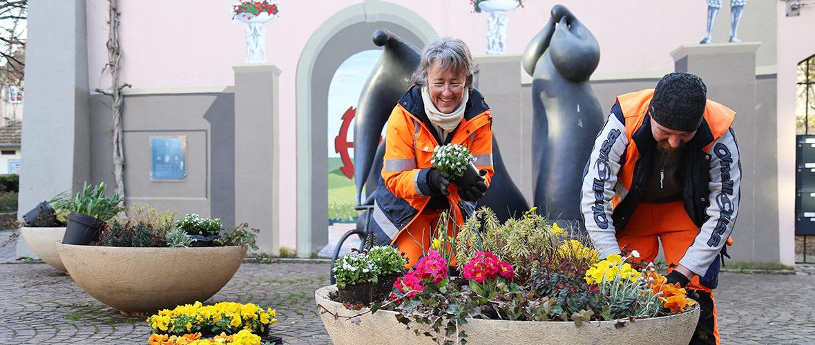 Des fleurs pour bien commencer le printemps | M+ Mulhouse