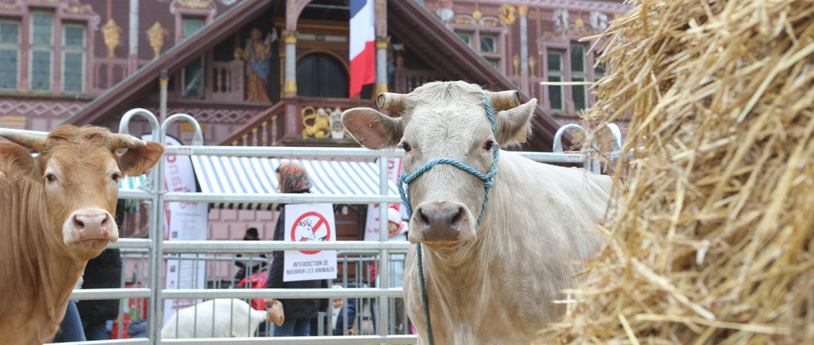 Marché de Pâques : chocolats, animaux et produits locaux | M+ Mulhouse