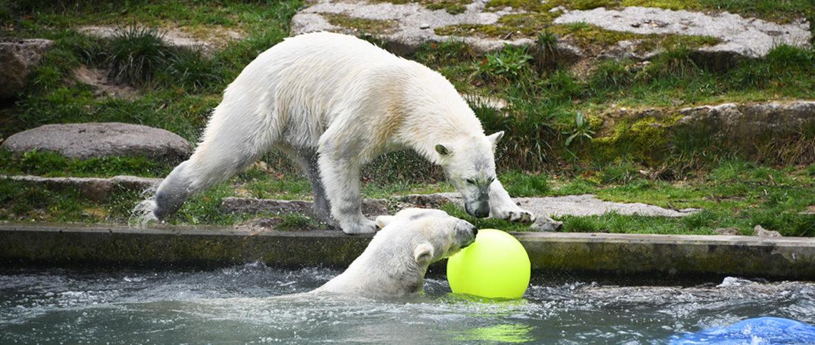 Zoo de Mulhouse : c'est parti pour une nouvelle saison | M+ Mulhouse