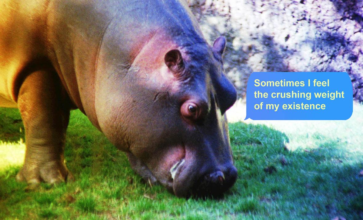 Un Paon et un Hippopotame se lancent dans un Débat Existentiel - Basim Magdy