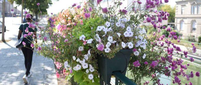 Label: et de «4 Fleurs» pour la Ville de Mulhouse!