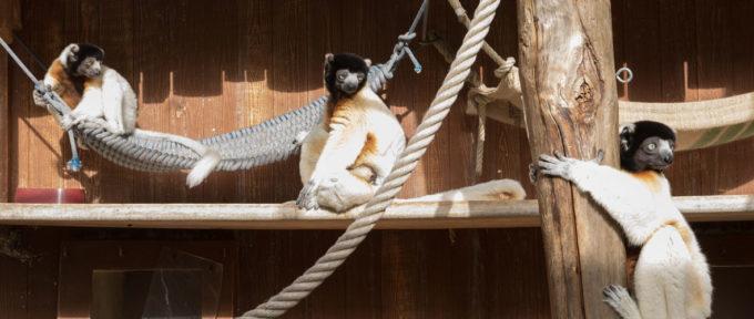 Zoo de Mulhouse : priorité au bien-être animal et à la conservation