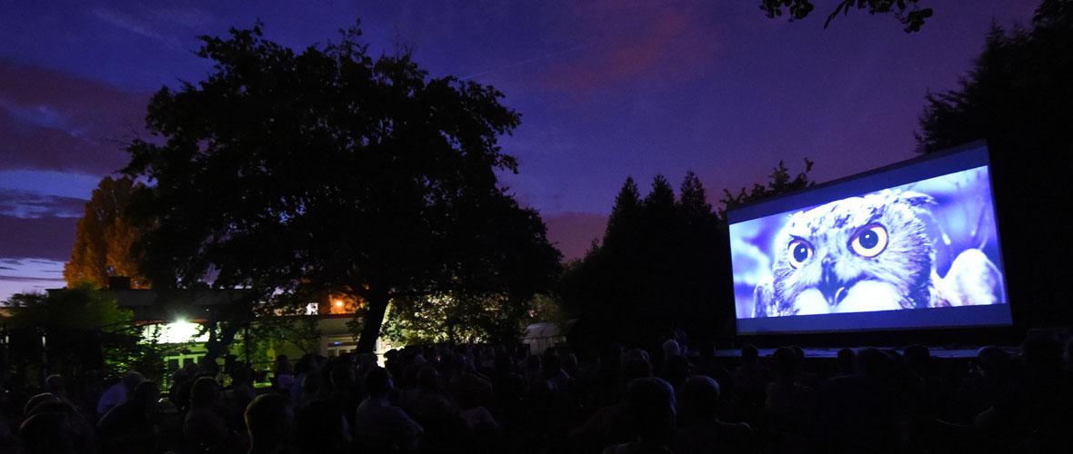 Cinéma en plein air sur les berges de l'Ill