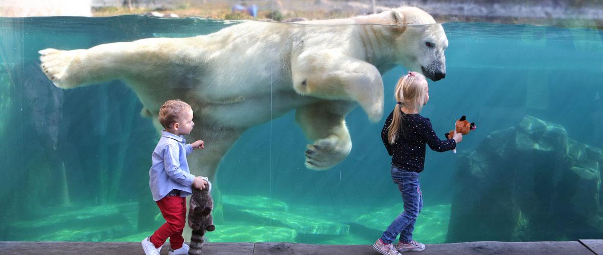 Les ateliers d'été du zoo