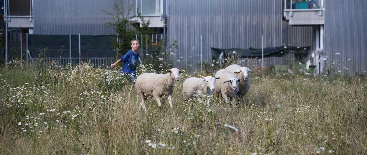 Quartier Neppert: «Mamie, il y a même des moutons!» | M+ Mulhouse