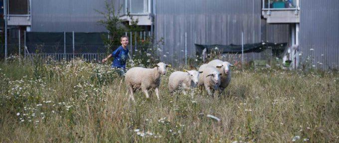 Quartier Neppert: «Mamie, il y a même des moutons!»