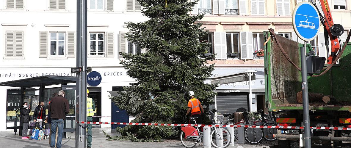 Deux sapins pour un Noël différent | M+ Mulhouse