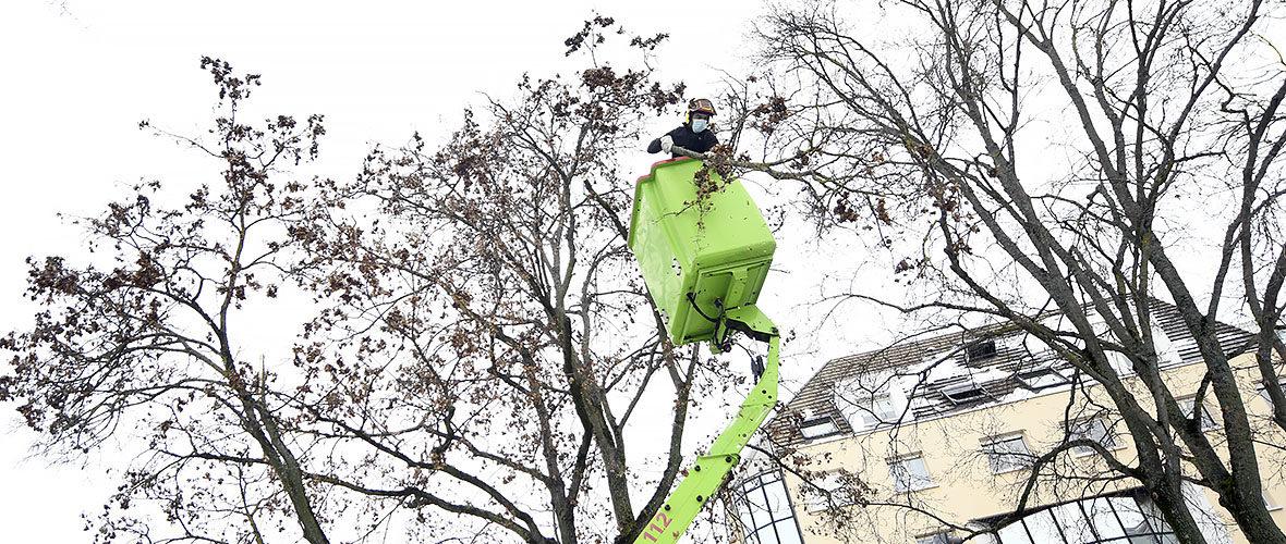 Neige: le patrimoine arboré mulhousien impacté, la Ville mobilisée | M+ Mulhouse