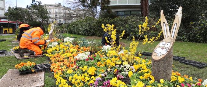 Dans les coulisses du fleurissement de printemps