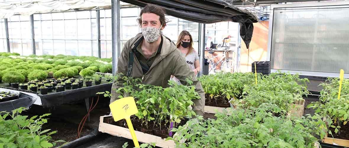 1500 plants de tomates offerts par la Ville de Mulhouse   M+ Mulhouse