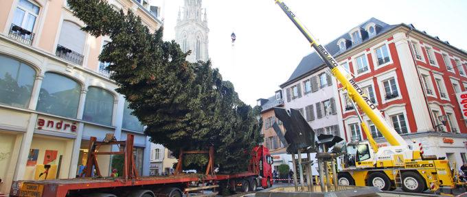 La Ville de Mulhouse à la recherche du grand sapin de Noël