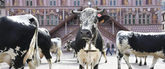 Bienvenue au village animé de Mulhouse, ce week-end!